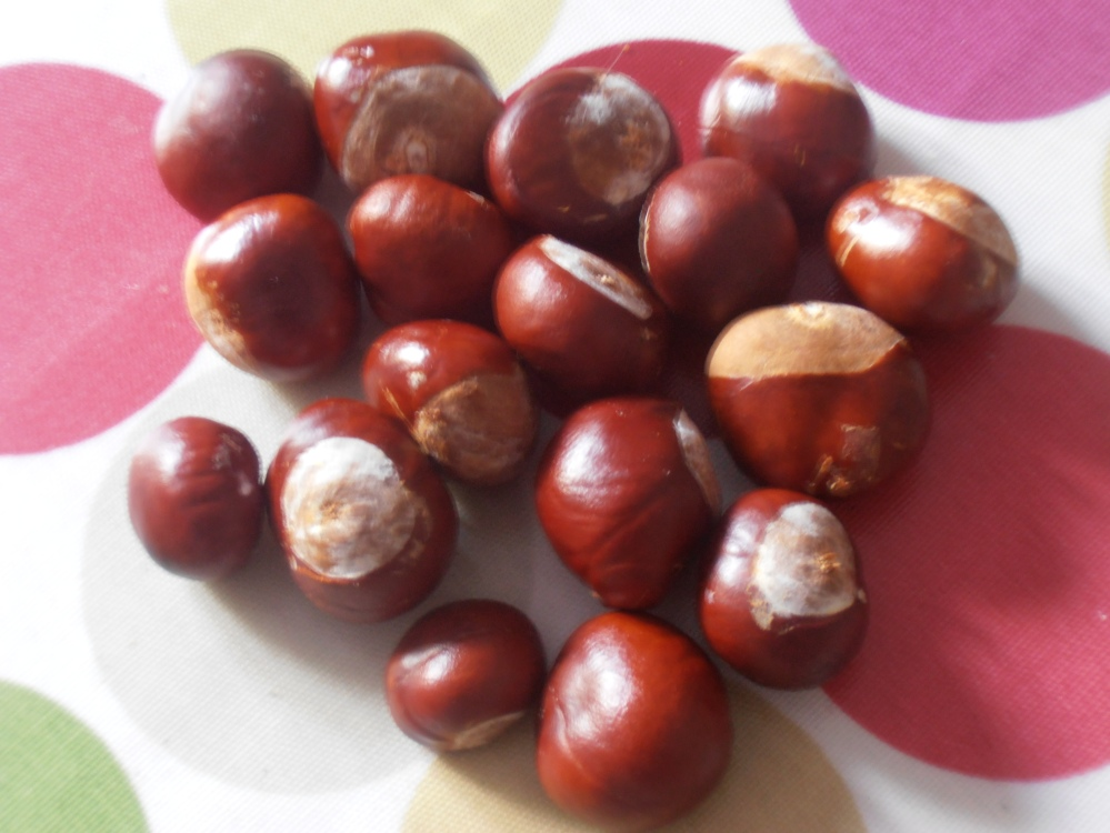 from one walk- chestnuts