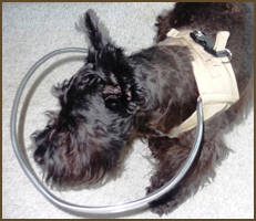 from: http://www.halosforpaws.com/our-dog-head-protection-product.html