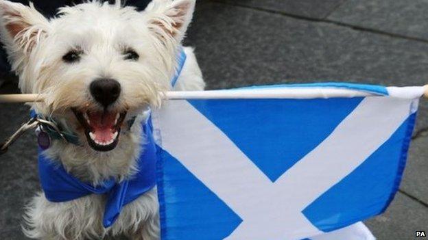 dog, Scottish flag