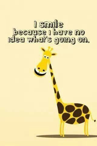 smiling giraffe, baffled